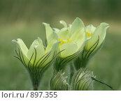 Купить «Весенние цветы», фото № 897355, снято 8 мая 2006 г. (c) Вадим Гиниятуллин / Фотобанк Лори