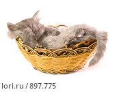 Котенок в корзинке. Стоковое фото, фотограф Алексей Многосмыслов / Фотобанк Лори