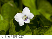 Купить «Белый цветок», фото № 898027, снято 17 октября 2018 г. (c) Парушин Евгений / Фотобанк Лори