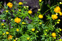 Желтый цветок, фото № 898031, снято 28 мая 2017 г. (c) Парушин Евгений / Фотобанк Лори