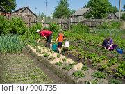 Купить «Семья работает на даче», фото № 900735, снято 30 мая 2009 г. (c) Денис Шароватов / Фотобанк Лори