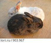 Купить «Крольчата», эксклюзивное фото № 903967, снято 27 апреля 2009 г. (c) Татьяна Юни / Фотобанк Лори