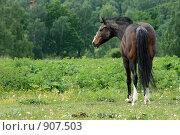 Купить «Конь в поле», фото № 907503, снято 6 июня 2009 г. (c) Яна Королёва / Фотобанк Лори