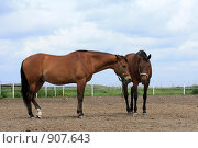 Купить «Две лошади», фото № 907643, снято 6 июня 2009 г. (c) Яна Королёва / Фотобанк Лори