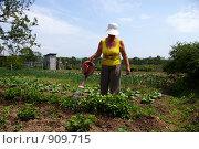Купить «Пенсионерка поливает клубнику», фото № 909715, снято 6 июня 2009 г. (c) Елена Климовская / Фотобанк Лори