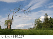 Купить «Сухое дерево на фоне летнего неба», фото № 910267, снято 5 июня 2009 г. (c) Владимир Казарин / Фотобанк Лори