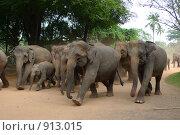 Слоны на марше. Стоковое фото, фотограф Андрей Рудаков / Фотобанк Лори