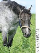 Купить «Лошадь в поле», фото № 920143, снято 14 июня 2009 г. (c) Яна Королёва / Фотобанк Лори