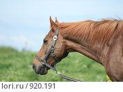 Купить «Конь крупным планом», фото № 920191, снято 14 июня 2009 г. (c) Яна Королёва / Фотобанк Лори