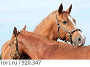 Купить «Лошади», фото № 920347, снято 14 июня 2009 г. (c) Яна Королёва / Фотобанк Лори