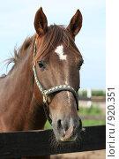 Купить «Портрет лошади», фото № 920351, снято 14 июня 2009 г. (c) Яна Королёва / Фотобанк Лори