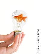 Купить «Золотая рыбка в лампочке», фото № 922639, снято 29 апреля 2009 г. (c) Jan Jack Russo Media / Фотобанк Лори
