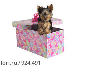 Купить «Подарок», фото № 924491, снято 5 марта 2009 г. (c) Тимофеев Павел / Фотобанк Лори
