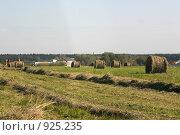 Купить «Жатва: полосы и снопы скошенного сена», фото № 925235, снято 24 сентября 2008 г. (c) Антон Алябьев / Фотобанк Лори