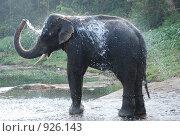 Слон моется. Стоковое фото, фотограф Ксения Шаханова / Фотобанк Лори