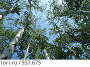 Небо и деревья. Стоковое фото, фотограф Роман Чабан / Фотобанк Лори
