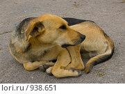 Пёс. Стоковое фото, фотограф Подбивалова Юлия / Фотобанк Лори