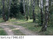 Купить «Лесная дорога», фото № 946651, снято 7 сентября 2008 г. (c) Юрий Синицын / Фотобанк Лори