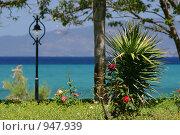 Тропический сад на побережье (2007 год). Стоковое фото, фотограф Дмитрий Кашканов / Фотобанк Лори