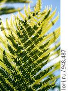 Листья папоротника. Стоковое фото, фотограф Борисова Юлия / Фотобанк Лори