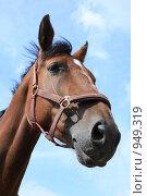Купить «Портрет лошади», фото № 949319, снято 29 июня 2009 г. (c) Яна Королёва / Фотобанк Лори