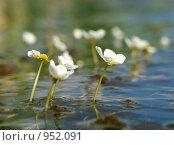 Цветы и вода. Стоковое фото, фотограф Роман Чабан / Фотобанк Лори