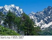Сосны на фоне синих гор. Стоковое фото, фотограф Альберт Черных / Фотобанк Лори