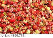 Купить «Лесные ягоды: клубника», фото № 956775, снято 29 июня 2009 г. (c) Хайрятдинов Ринат / Фотобанк Лори