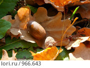 Осенний набор: лист дуба, желудь, чашечка желудя. Стоковое фото, фотограф Константин Сапронов / Фотобанк Лори