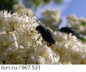 Купить «Муха», фото № 967531, снято 5 июля 2009 г. (c) Евгений Перов / Фотобанк Лори