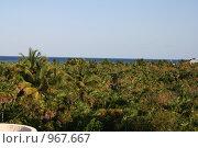 Пальмы. Стоковое фото, фотограф Александр Олихов / Фотобанк Лори