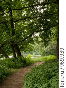 Купить «Тропинка в лесу», фото № 969939, снято 20 мая 2018 г. (c) Fairy Water / Фотобанк Лори