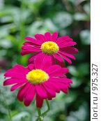 Цветы лета. Стоковое фото, фотограф Валерий Кондрашов / Фотобанк Лори