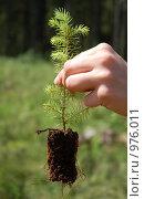 Купить «Лесовосстановление», фото № 976011, снято 9 июня 2007 г. (c) Татьяна Едренкина / Фотобанк Лори