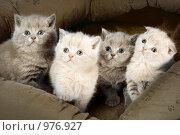 Купить «Котята», фото № 976927, снято 15 марта 2009 г. (c) Алексей Хромушин / Фотобанк Лори