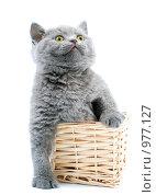 Купить «Котенок в корзинке на белом фоне», фото № 977127, снято 27 октября 2007 г. (c) Алексей Хромушин / Фотобанк Лори