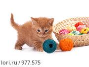 Купить «Котенок играет с клубками», фото № 977575, снято 25 июня 2009 г. (c) Cветлана Гладкова / Фотобанк Лори