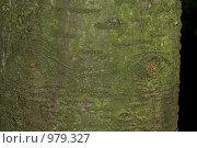 Взгляд природы. Стоковое фото, фотограф Алексей Васильев / Фотобанк Лори