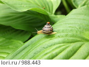 Купить «Улитка и жучок», фото № 988443, снято 20 июля 2009 г. (c) Павел Гундич / Фотобанк Лори