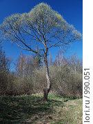 Купить «Дерево», фото № 990051, снято 2 мая 2009 г. (c) Криволап Ольга / Фотобанк Лори
