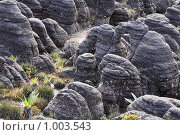 Купить «Пейзаж на горе Рорайма (Венесуэла)», фото № 1003543, снято 3 июня 2009 г. (c) Владимир Мельник / Фотобанк Лори