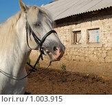 Купить «Конь у конюшни», фото № 1003915, снято 28 июля 2009 г. (c) Елена Азарнова / Фотобанк Лори