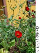 Купить «Фрагмент, альпийская горка», фото № 1009743, снято 1 августа 2009 г. (c) Tamara Sushko / Фотобанк Лори