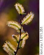 Купить «Цветение», фото № 1011351, снято 29 апреля 2009 г. (c) Александр Артемьев / Фотобанк Лори