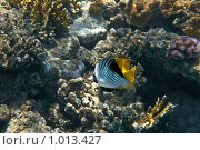 Купить «Рыбка красноморская», фото № 1013427, снято 28 июля 2009 г. (c) rommor / Фотобанк Лори