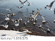 Чайки. Стоковое фото, фотограф Татьяна Иванова / Фотобанк Лори