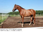 Купить «Конь стоит в загоне», фото № 1021631, снято 6 августа 2009 г. (c) Яна Королёва / Фотобанк Лори