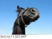 Купить «Черная лошадь», фото № 1021647, снято 6 августа 2009 г. (c) Яна Королёва / Фотобанк Лори