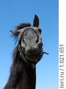 Купить «Черный конь», фото № 1021651, снято 6 августа 2009 г. (c) Яна Королёва / Фотобанк Лори