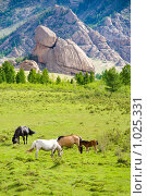 Купить «Летний степной пейзаж.  Табун лошадей пасется на траве. Монголия», фото № 1025331, снято 17 июня 2009 г. (c) Александр Подшивалов / Фотобанк Лори